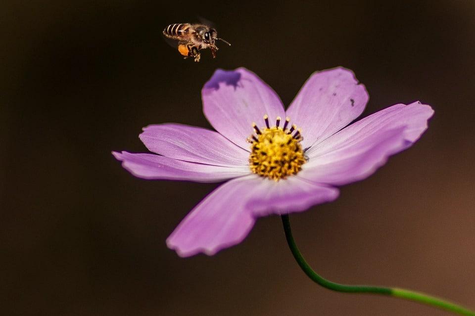 flower-1036651_960_720